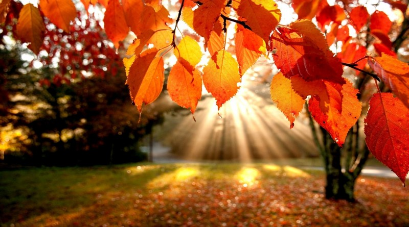 autumn-leaves-wallpapers-photos1